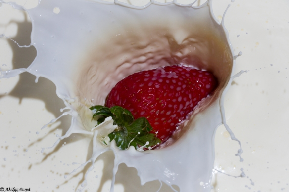 Strawberry in Milk - 1920c